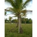 Palms Ex Ground