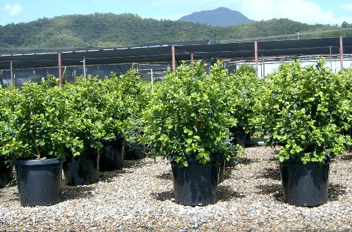 MAD ABOUT PLANTS Home Page Wholesale Nursery